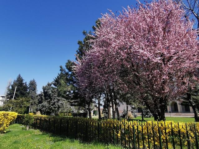 parks of Bucharest